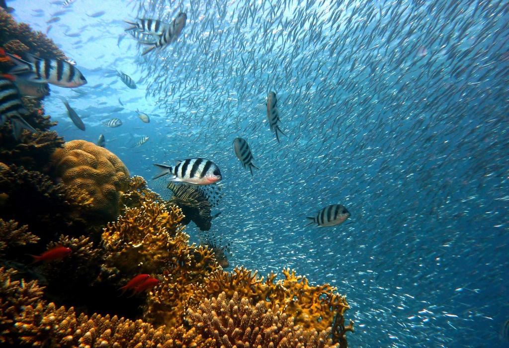 Diccionarios y glosarios de pesca y acuicultura